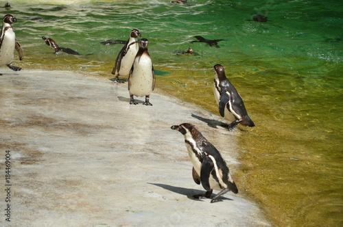 Plexiglas Pinguin Animals
