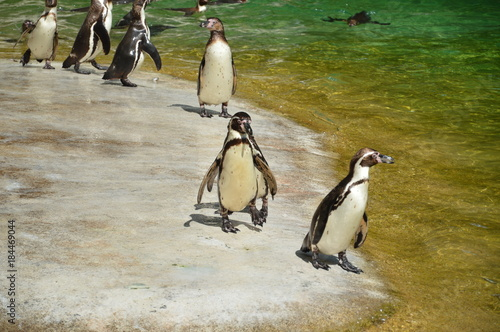 Foto op Canvas Antarctica Animals