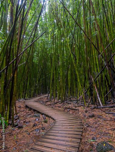 Plexiglas Bamboe Pipiwai Trail winds through the bamboo forest