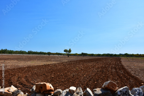 Foto op Canvas Chocoladebruin Italy, Puglia, countryside with cultivated land.