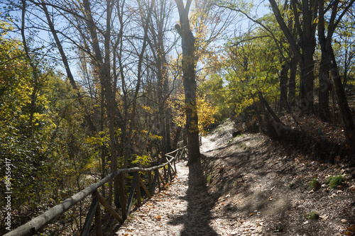 In de dag Weg in bos Paisaje de otoño