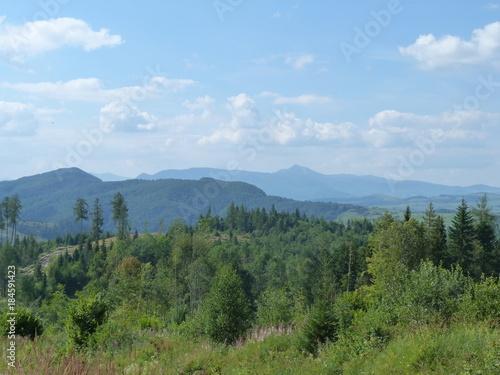 Keuken foto achterwand Blauwe hemel Wild vegetation on the top of the mountain range Borzhava.