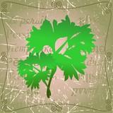 Sprig of parsley - 184592804