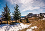 spruce trees near the fence on hillside with weathered grass and snow. lovely springtime scenery in mountains - 184612033