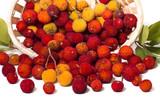 Strawberry Tree (Arbutus Unedo) fruit - 184638656
