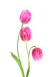 Bouquet of tulip on a white background. Clipping path - 184642213