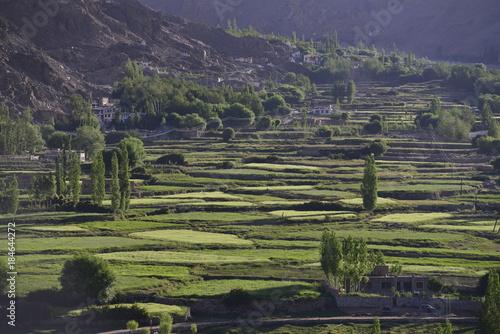 Staande foto Rijstvelden Green rice fields on terraces on the mountainside, terraced farming.