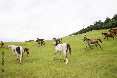 Plexiglas Paarden 北海道の馬