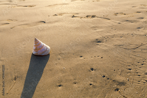 Papiers peints Beige Shell on the beach with golden evening light