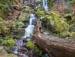 Baumstamm vor einem Wasserfall - 184671414