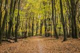 Beech Trees and Path in Vierhouten - 184672442