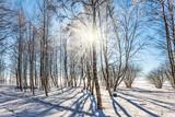 Sunset in aspen grove - 184676494