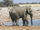 Elefant Gnu und Nashorn in Afrikanischer Steppe
