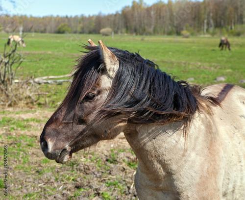 Plexiglas Paarden Wild horses on a field.