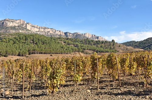 Foto op Aluminium Wijngaard vineyards in autumn near the village of La Vilella Alta, in the background the mountain of Montsant, El Priorat, Tarragona, Spain