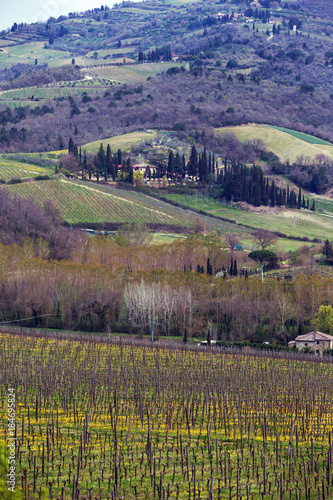 Foto op Canvas Wijngaard Vineyards of Tuscany