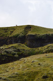 Una pecora in cresta
