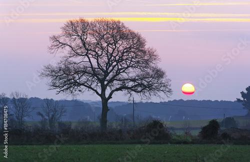 Fotobehang Lichtroze aurore sur la campagne bretonne en hiver