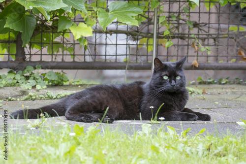 Aluminium Panter Schwarze Katze