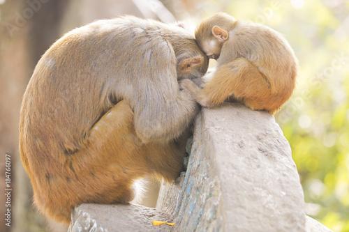 Fotobehang Aap Cute monkey with baby sleeping