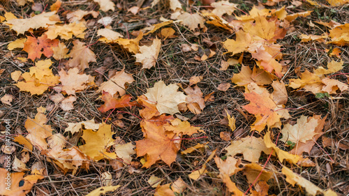 Autumn leaves on the ground, a variety of flowers, in the autumn afternoon yellow green brown plants.
