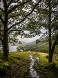 walking on the west highland way near loch lomond, scotland - 184835015