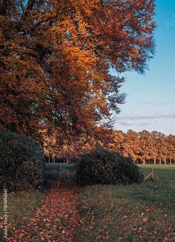 Staande foto Diepbruine Garden fence and hedge under orange colored autumn tree.