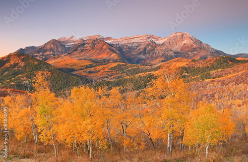 Fotobehang Oranje eclat Fall landscape in the Wasatch Mountains, Utah, USA.