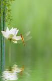composition aquatique, lotus, bambou, libellule, concept zen relaxation