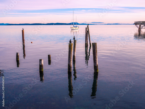 Foto op Plexiglas Canada Cormorant on piles at the shore. Sidney, BC, Vancouver Island, Canada