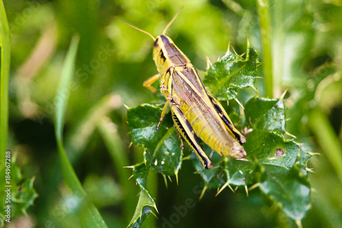 Foto op Aluminium Canada Closeup of the back and wings of a grasshopper