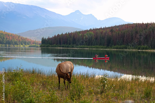 Plexiglas Canada Canoes enjoy the Rocky mountains with wildlife on the shore