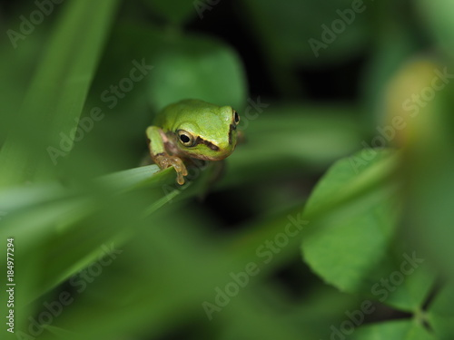 Aluminium Kikker 葉っぱの上にのるカエル