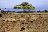 African wildlife - 184987429