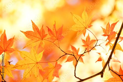 Foto op Aluminium Zwavel geel 紅葉
