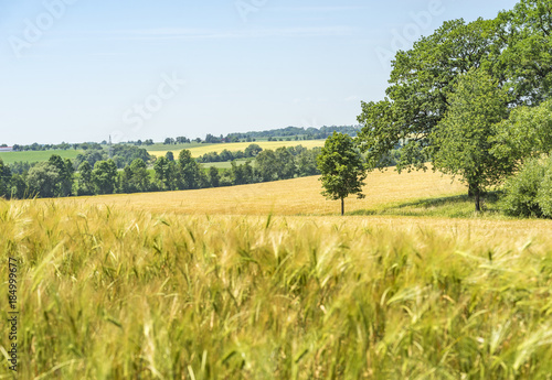 Tuinposter Oranje rural scenery in Hohenlohe
