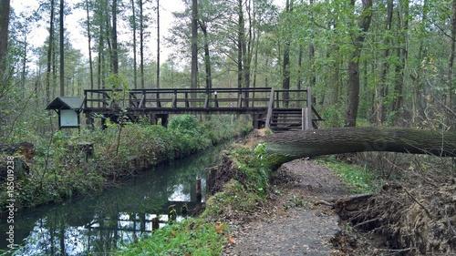 Foto op Aluminium Khaki Natur Wald Wiese Landschaft Wasser Flora Fauna
