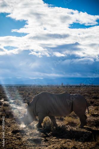 Fotobehang Neushoorn Rhinos in Cape Town Safari