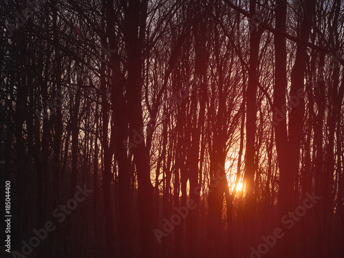 Papiers peints Bordeaux Warm sunlight at sunset in managed woodland in England,UK.