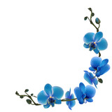 Orchid. Tropical flowers. Floral vector background. Blue. Frame. Wreath. Border.