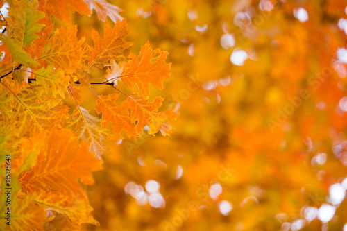 Staande foto Herfst Autumn yellow maple leaves background