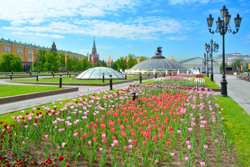 Moscow. Tulips on Manezh square