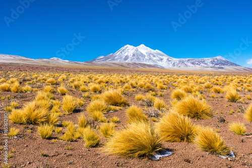 Paysage de l'altiplano