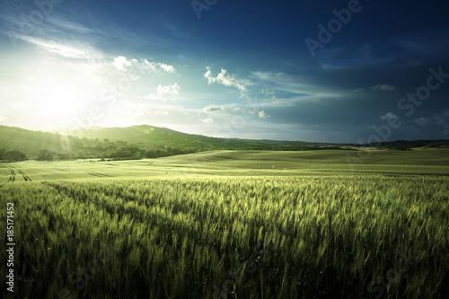 Aluminium Lente Green field of wheat in Tuscany, Italy
