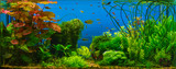 Tropical fresh water aquarium - 185178050