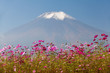 Field of cosmos flowers and Mountain Fuji in autumn season at Yamanakako Hanano Miyako Koen - 185201653