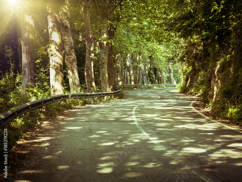Foto op Canvas Natuur road in green forest with sun beams