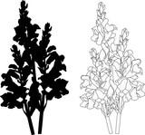 garden flower black silhouette and outline on white
