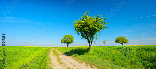In de dag Lime groen Dirt Road through Field Landscape with trees under Blue Sky in Spring