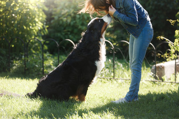 The girl with the pet. Bernese mountain dog in nature